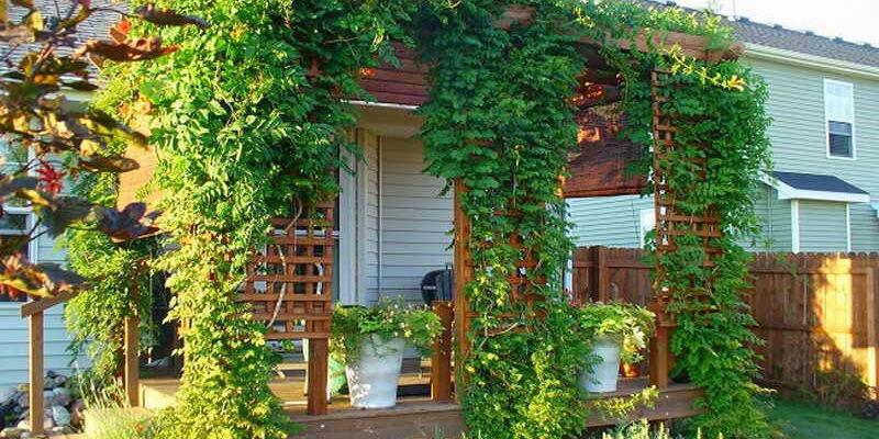 деревянный дом под кронами лиан