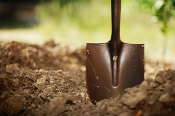 перекапывать почву под деревьями и кустами