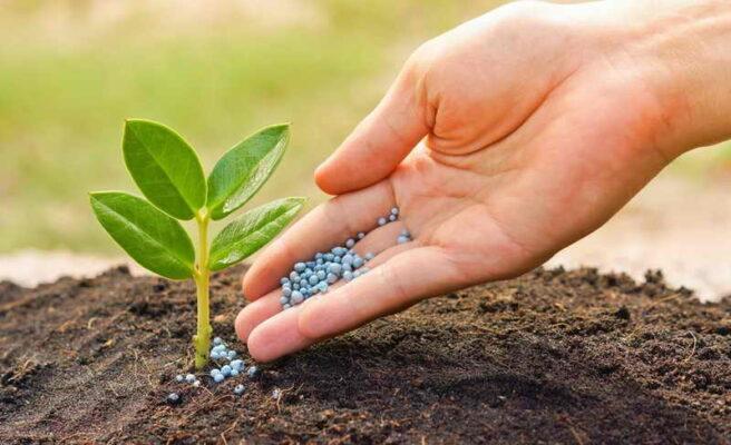 подкармливать садовые растения