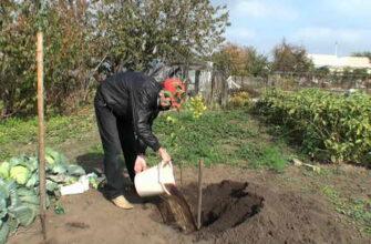 после посадки утаптывать почву