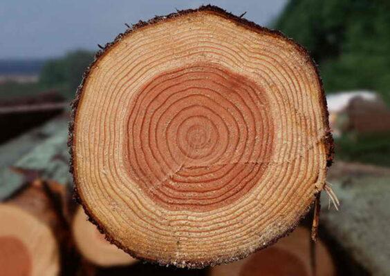 состояние древесины