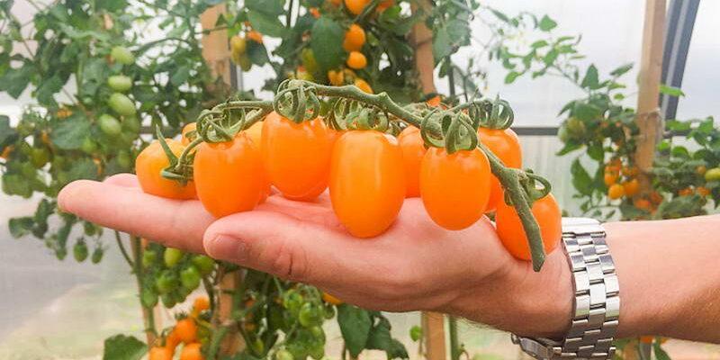 Урожай с подоконника